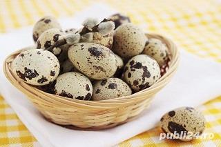 Oua prepeliță