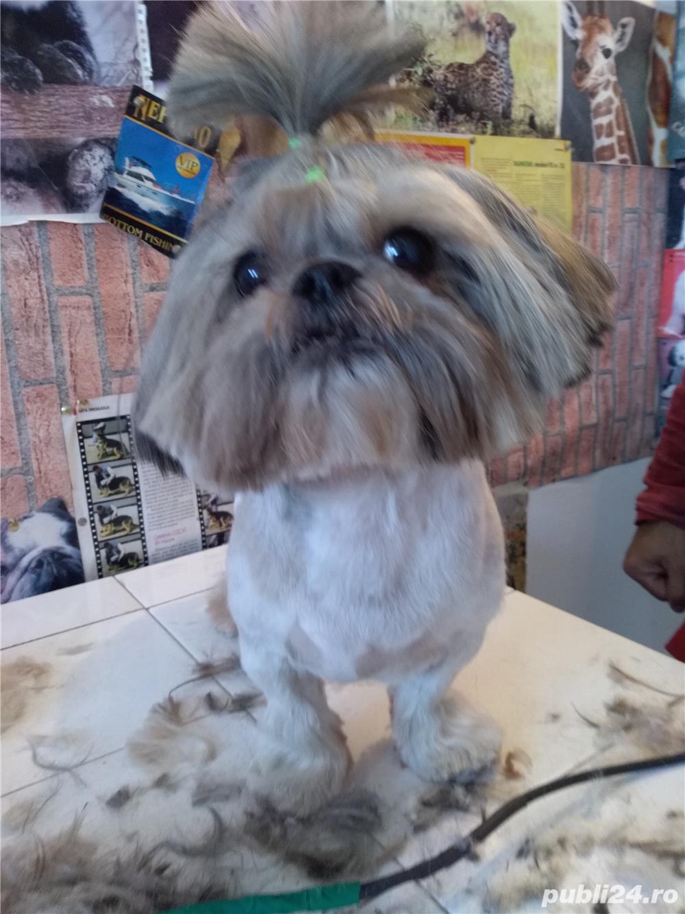 Frizerie și cosmetica felina și canina