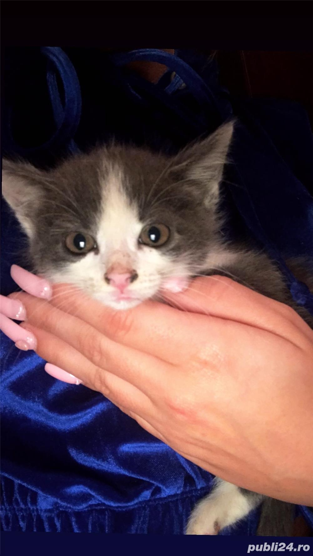 Dau spre adopție 4 pisicuțe care au aproximativ 3 săptămâni