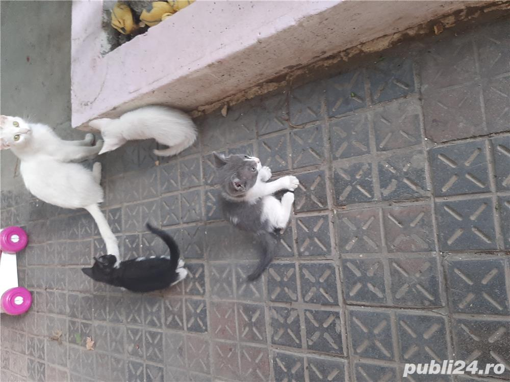 Pisicuti