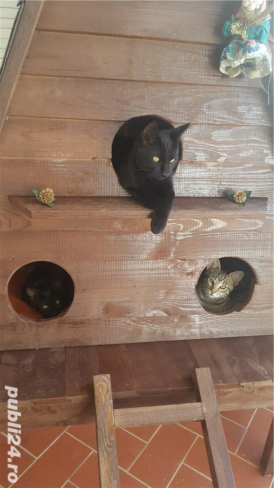 Căsuță pentru pisici