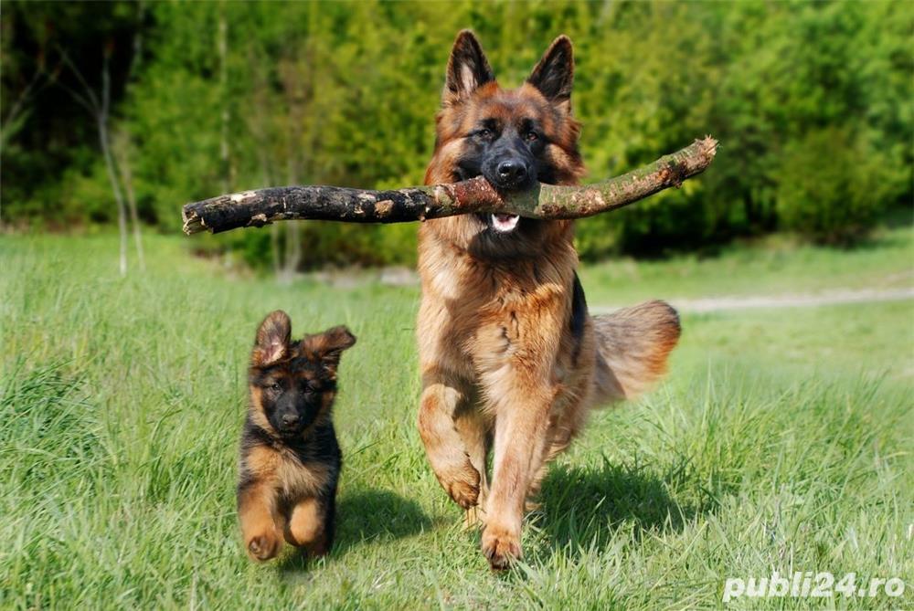 dtresaj canin
