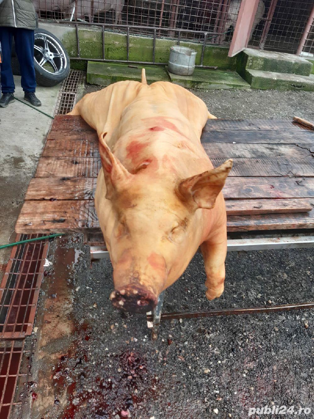 Porci de sacrificat