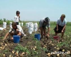 Germania - Agricultura