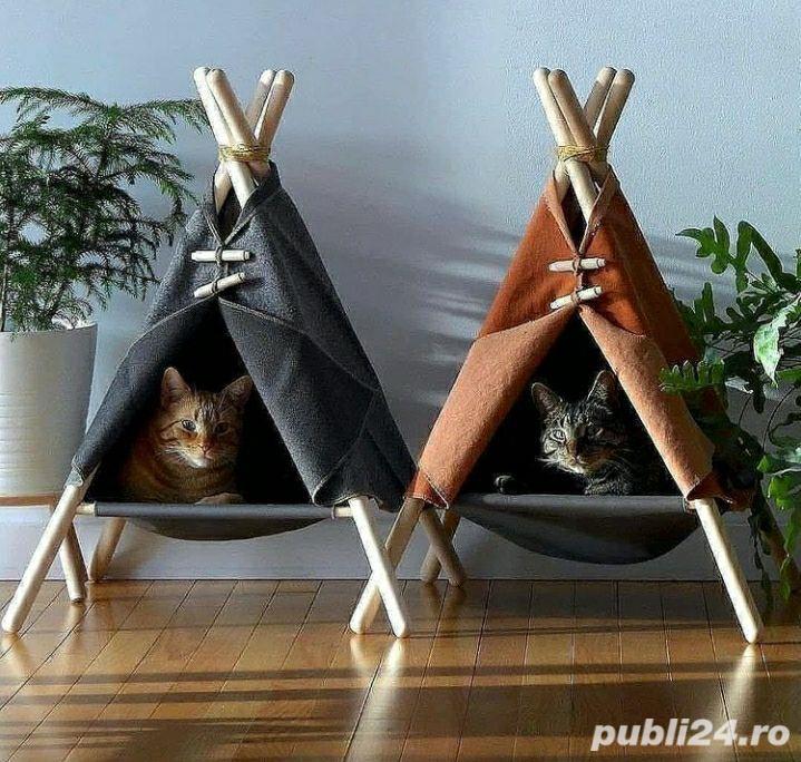 Adăpost pisici aristrocate