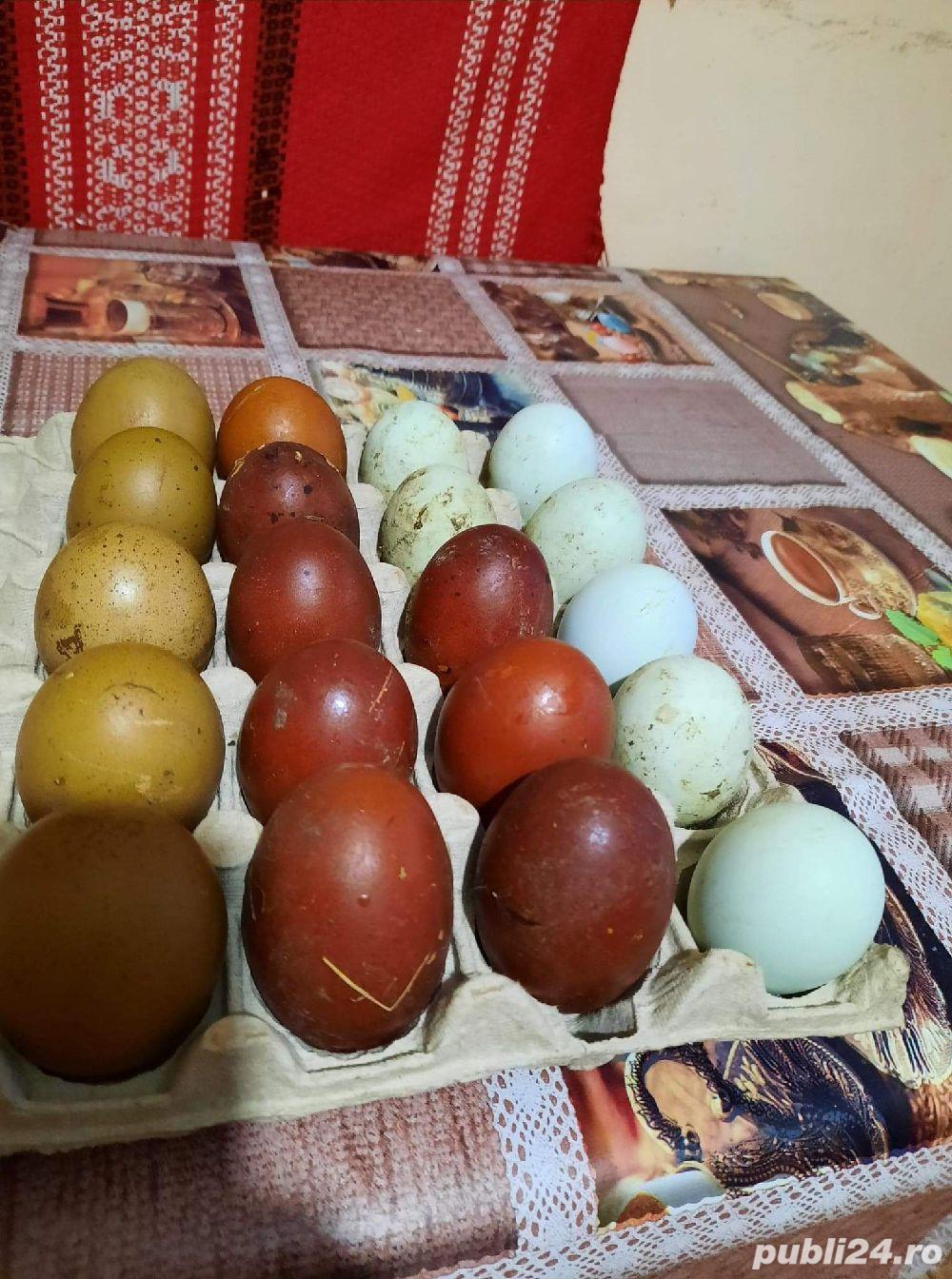 Ouă Marans