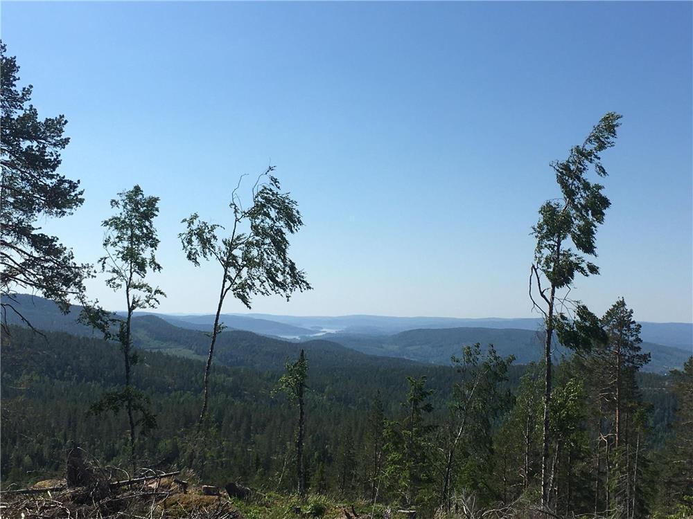 Bjarne Company lucrator in industra forestia