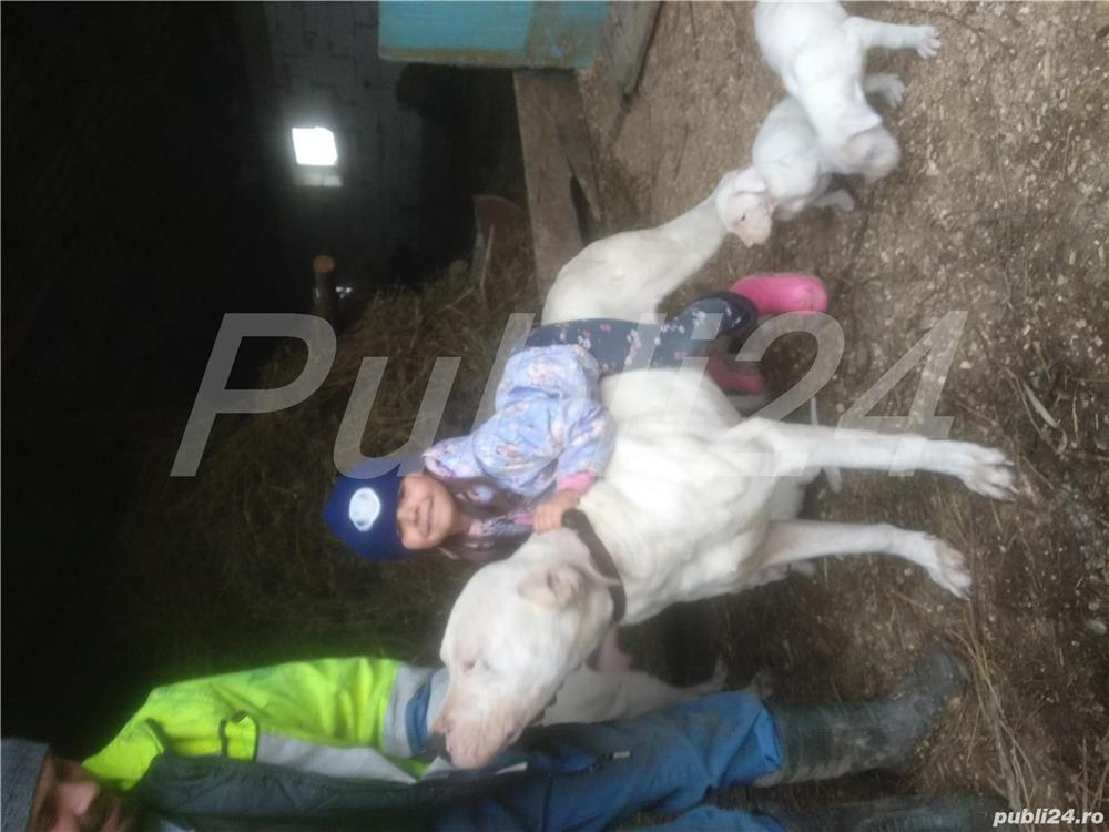 Dogiargentino
