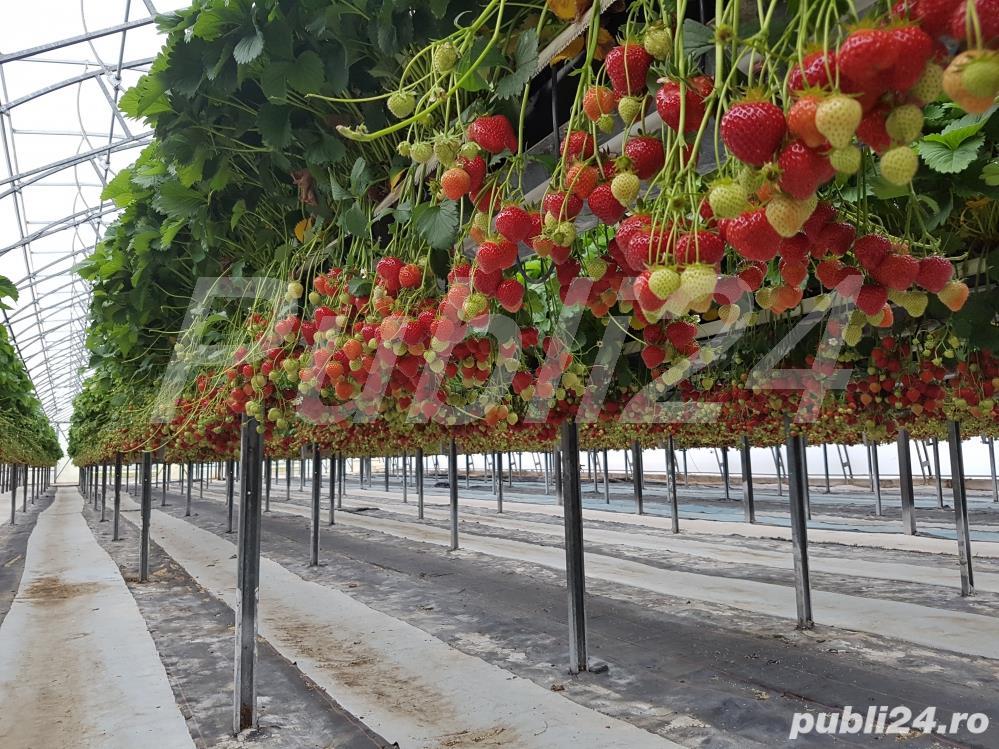 Sezonieri ferma agricola Germania