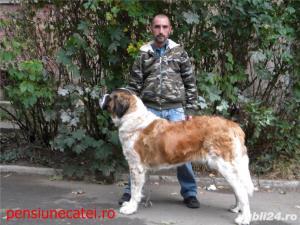 Pensiune canina&Dresaj canin Ploiesti - imagine 4