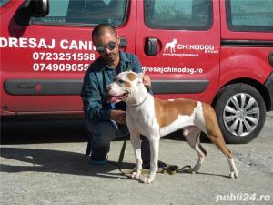 Pensiune canina&Dresaj canin Ploiesti - imagine 6