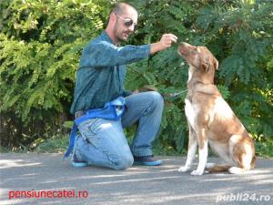 Pensiune canina&Dresaj canin Ploiesti - imagine 5