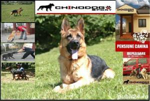 Pensiune canina&Dresaj canin Ploiesti - imagine 8