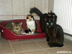 Pensiune felina-cazare pisici Ploiesti - imagine 2