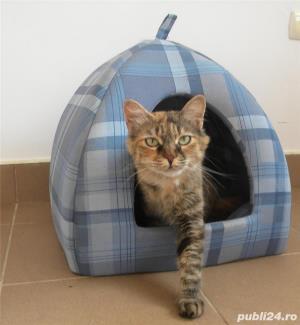 Pensiune felina-cazare pisici Ploiesti - imagine 4