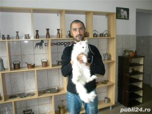 Pensiune felina-cazare pisici Ploiesti - imagine 1