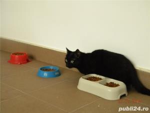 Pensiune felina-cazare pisici Ploiesti - imagine 6