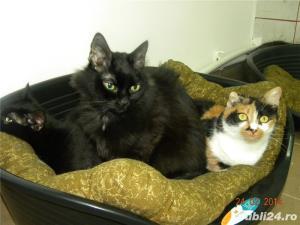 Pensiune felina-cazare pisici Ploiesti - imagine 5