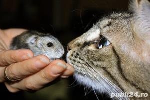 Pensiune felina-cazare pisici Ploiesti - imagine 8