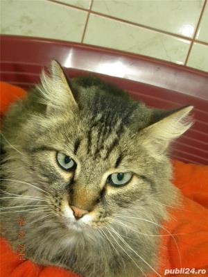 Pensiune felina-cazare pisici Ploiesti - imagine 7