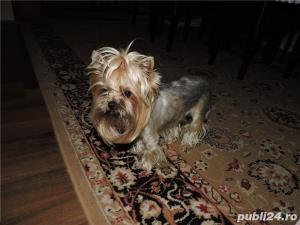 YORKSHIRE TERRIER TOY - imagine 8