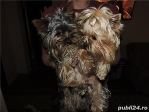 YORKSHIRE TERRIER TOY - imagine 7