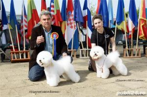 Vand Bichon Frise cu pedigree si pasaport international - imagine 19