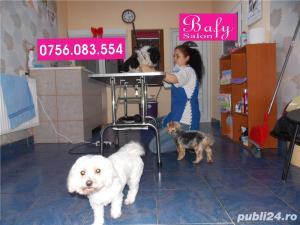 Tuns caini (coafor canin) - Salon canin BAFY---Micalaca - imagine 2
