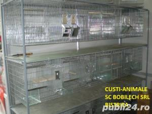 Custi pentru chinchilla reproductie Custi-Animale Bistrita - imagine 4
