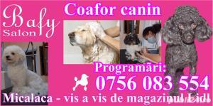 Tuns caini (coafor canin) - Salon canin BAFY---Micalaca - imagine 1