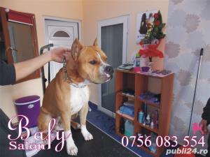 Tuns caini (coafor canin) - Salon canin BAFY---Micalaca - imagine 3