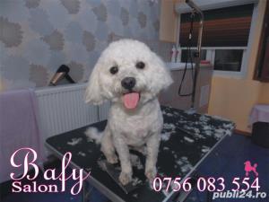 Tuns caini (coafor canin) - Salon canin BAFY---Micalaca - imagine 5