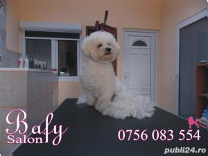 Tuns caini (coafor canin) - Salon canin BAFY---Micalaca - imagine 4