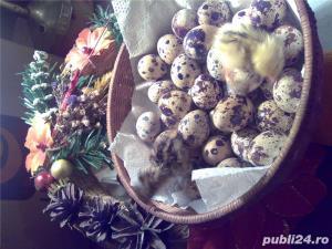 Oua de prepelita pentru incubat - imagine 1