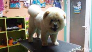 Salon canin Timisoara / Tuns caini Timisoara - imagine 5