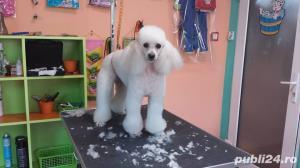 Salon canin Timisoara / Tuns caini Timisoara - imagine 8