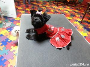 Salon canin Timisoara / Tuns caini Timisoara - imagine 16