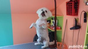 Salon canin Timisoara / Tuns caini Timisoara - imagine 7