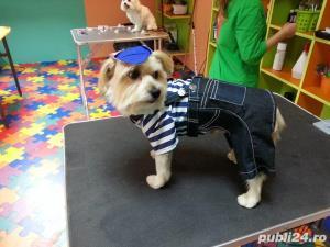 Salon canin Timisoara / Tuns caini Timisoara - imagine 15