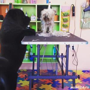 Salon canin Timisoara / Tuns caini Timisoara - imagine 12