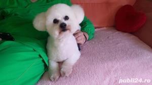 Salon canin Timisoara / Tuns caini Timisoara - imagine 9