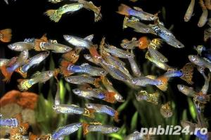 Vand pesti acvariu ! - imagine 2