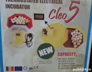 Clocitoare cleo - imagine 8