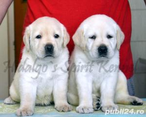 Pui Labrador Retriever cu pedigree tip A - imagine 1