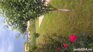 Cernica Padure - imagine 2