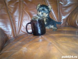 Yorkshire terrier mini toy - imagine 1