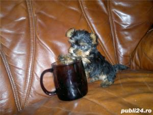 Yorkshire terrier mini toy - imagine 3