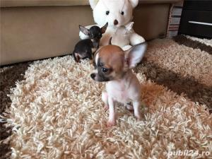 Chihuahua extra toy - imagine 3