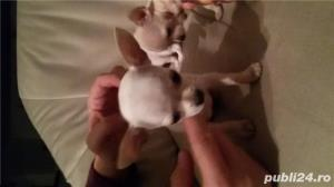 Chihuahua extra toy - imagine 6