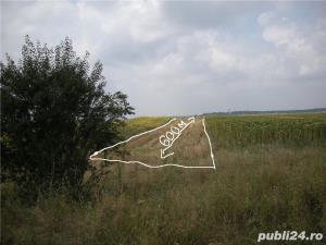 Teren agricol 5000m-Strejnic - imagine 2